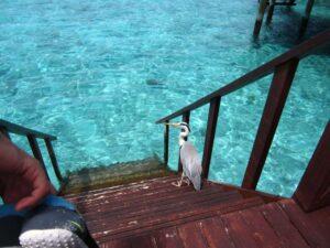 水上コテージ-モルディブーBIRD