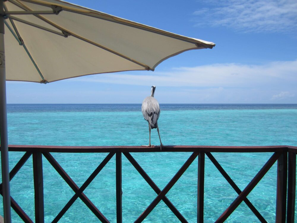 水上コテージ-モルディブ